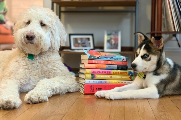 On the left is a white, fluffy goldendoodle and on the right is my husky mix puppy. In between is a stack of books for my